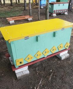 Žalsvas avilys su geltonu stogu