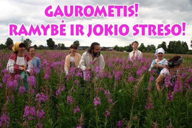 gaurometis