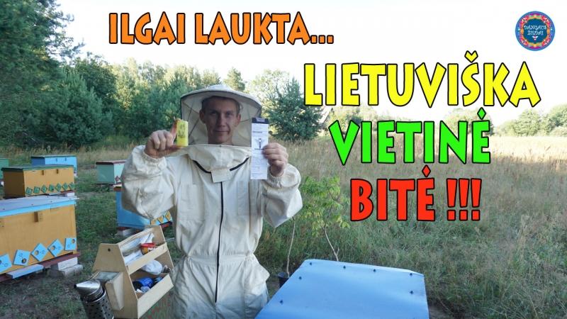 Lietuviškos vietinės bitės