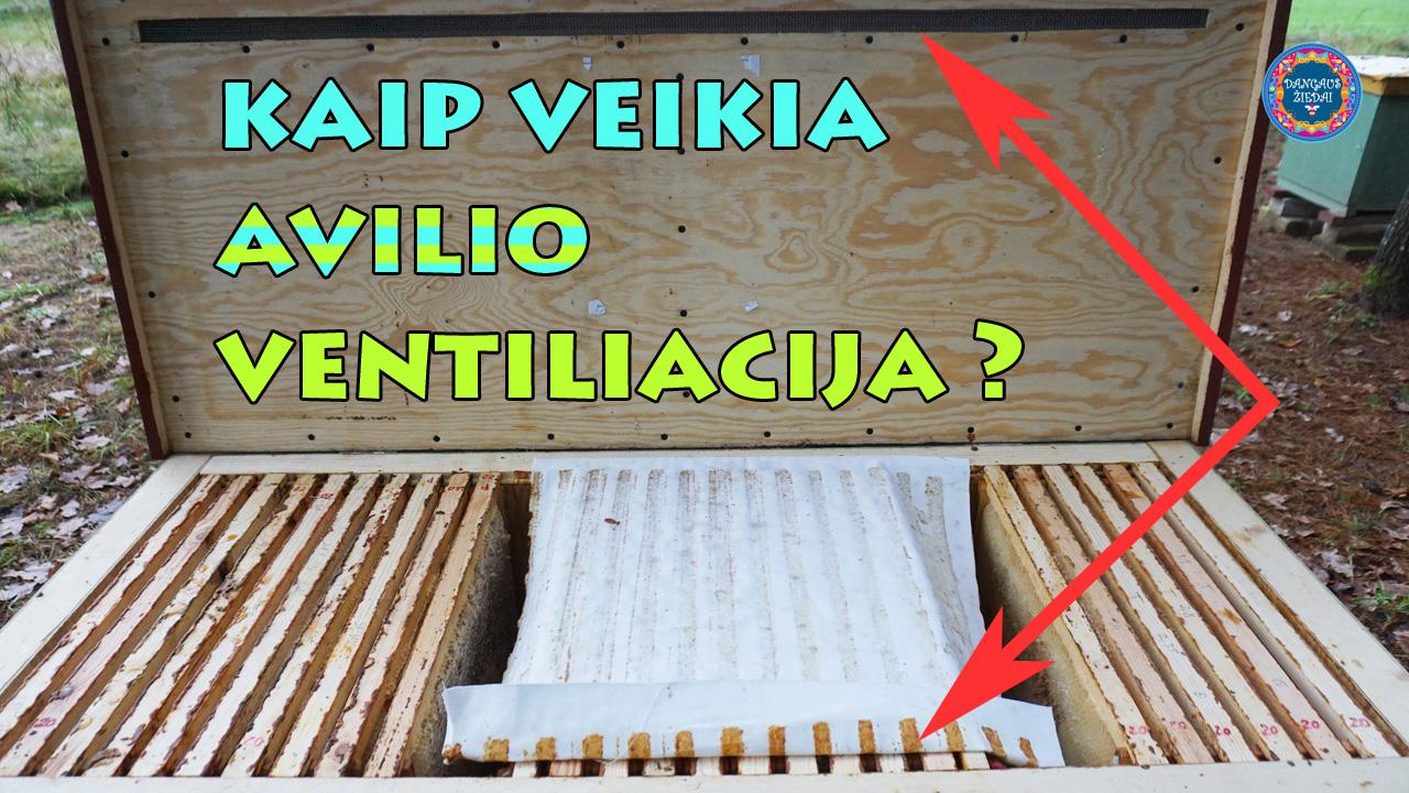 Kaip veikia avilio ventiliacija?